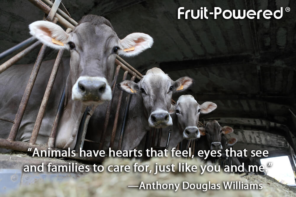 Animals have hearts that feel, eyes that see, and families to care for, just like you and me.