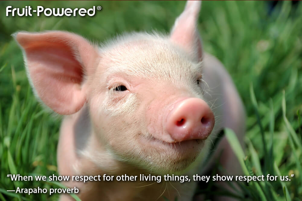 When we show respect for other living things, they show respect for us
