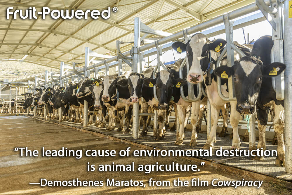 The leading cause of environmental destruction is animal agriculture.