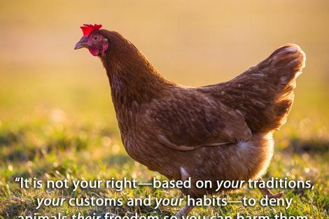 It is not your right—based on your traditions, your customs and your habits—to deny animals their freedom so you can harm them, enslave them and kill them.