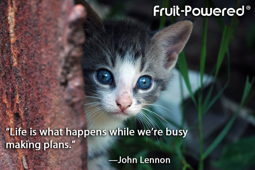 Life is what happens while we're busy making plans.