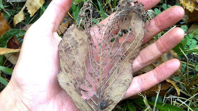 A broken, delicate leaf in a woman's hand