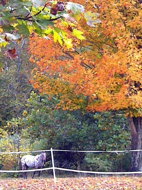 A horse gallops beside a tree in autumn