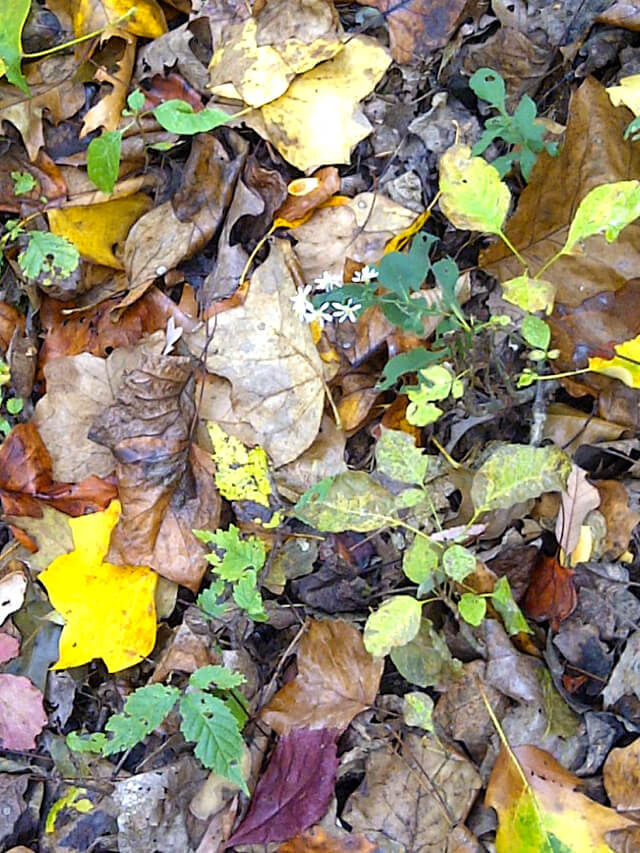 Tree leaves decorate the ground in autumn