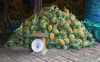 Pineapple abounds at Muang Mai Market in Chiang Mai, Thailand