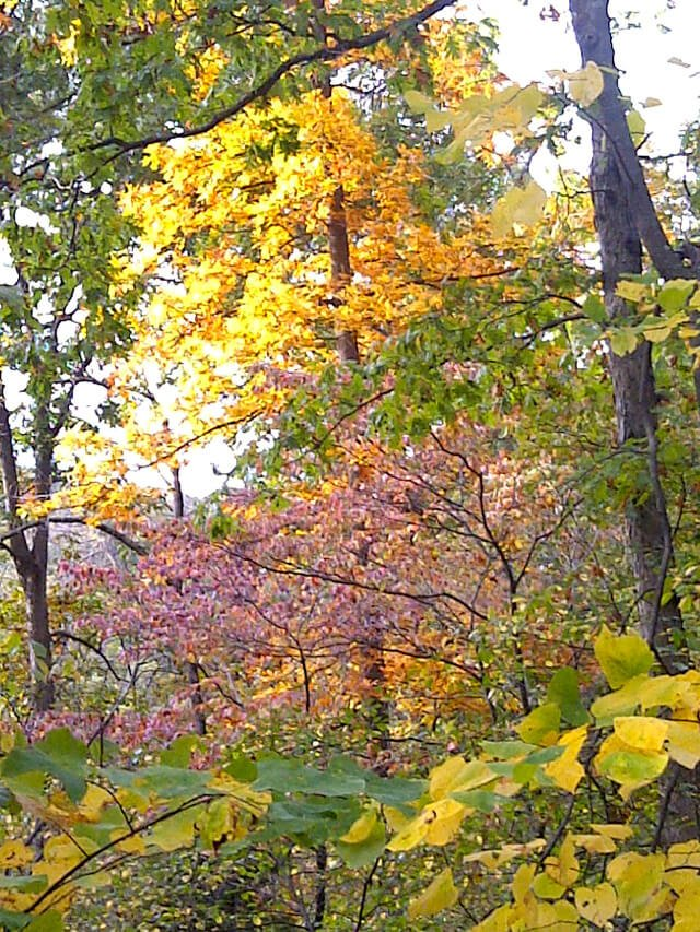 Leaves on trees are awash in blazing color in fall