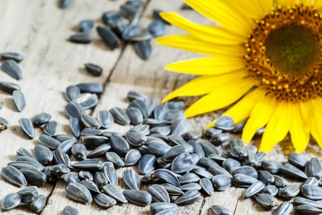 Sunflower seeds and a sunflower on a wooden surface