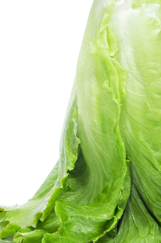 A head of romaine lettuce upside-down against white background