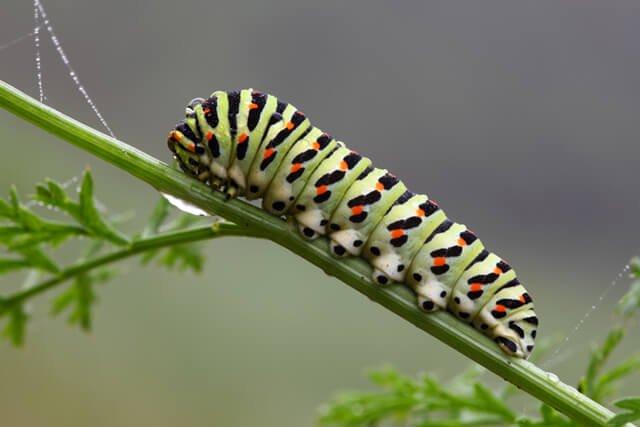 A caterpillar climbs a plant