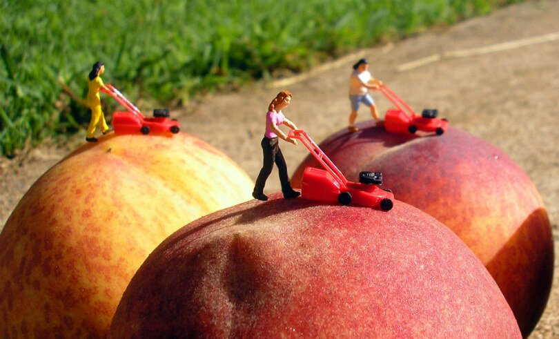 Fruit art by Anne Osborne - women mowing peaches in creating nectarines - Fruit-Powered