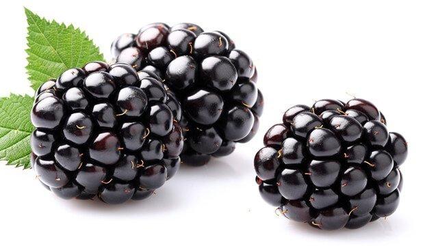 Three blackberries against a white background