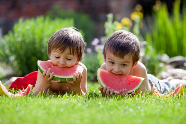 Two boys eating watermelon wedges in a field