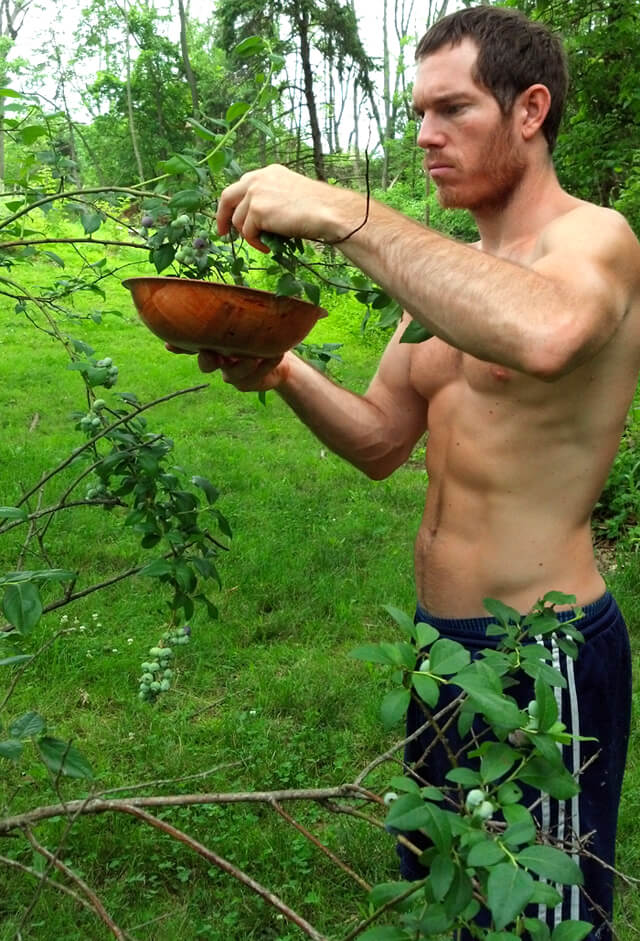Korey Constable picks blueberries in a lush field