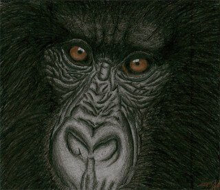 Painting of a primate by Tarah Millen