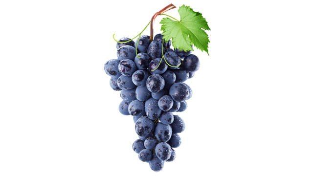 Grapes hang against a white background