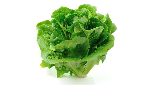 A head of romaine lettuce against a white background