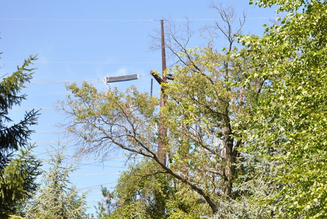 Utility pole and wires visible behind trees