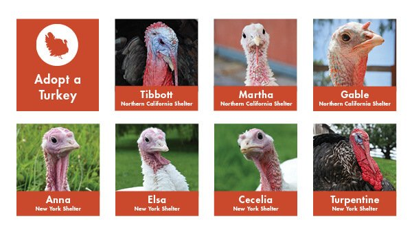 2014 Adopt a Turkey banner from FarmSanctuary.org