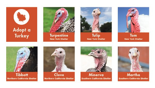 Adopt a Turkey banner from FarmSanctuary.org