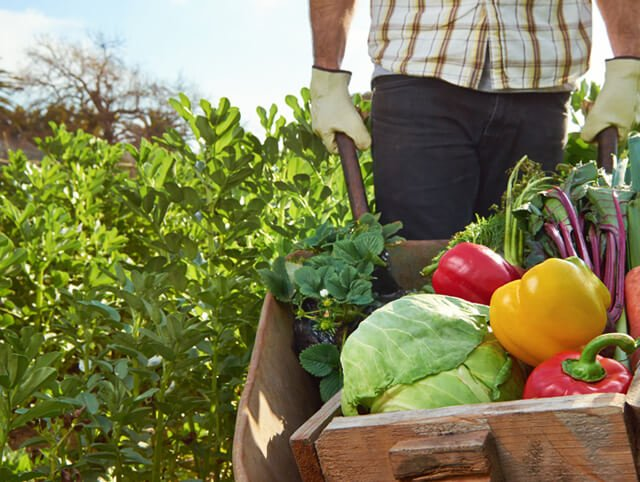 A farmer transports fruits and vegetables from a local organic farm