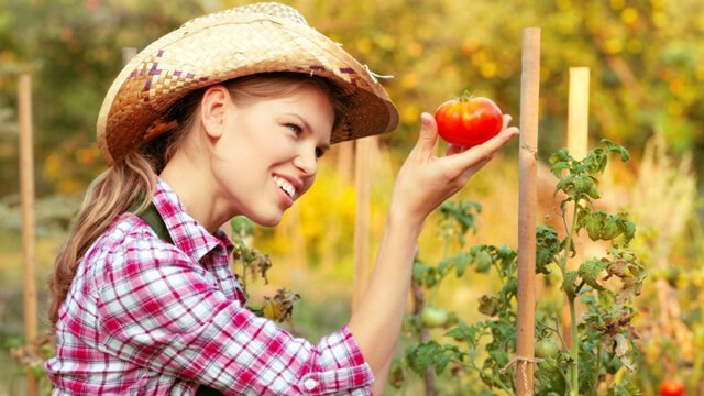 Female farmer inspects a tomato with glee
