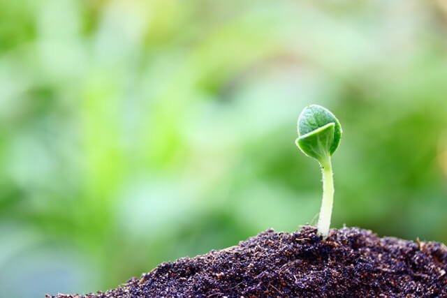A plant grows in fertile soil