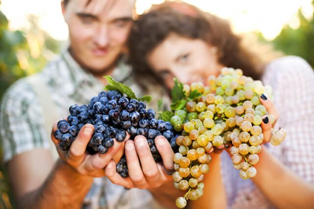 A man and woman hold freshly picked grapes