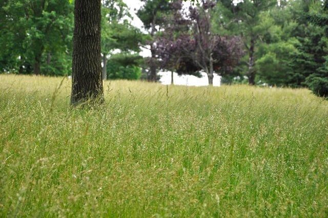 Closeup of a grassy field
