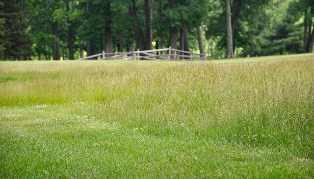 A wide-open grassy field