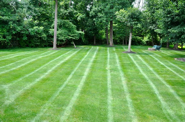 A perfectly striped suburban lawn