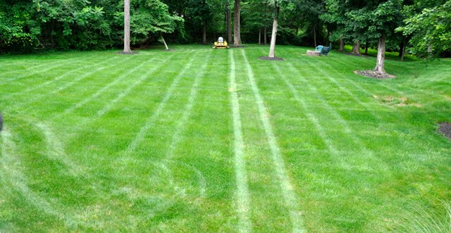 A lawn bears stripes from a first mowing pass