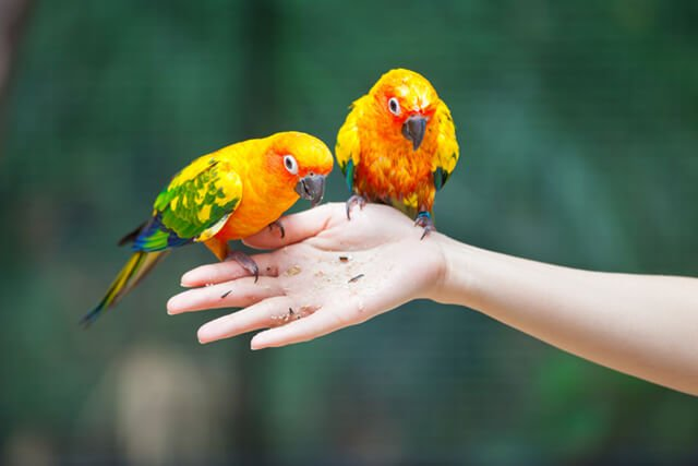 Colorful parrots eating from a human hand