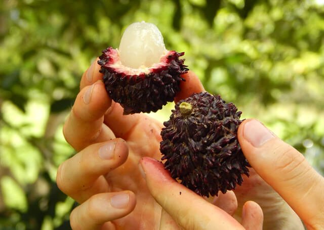 A closeup of a black pulasan