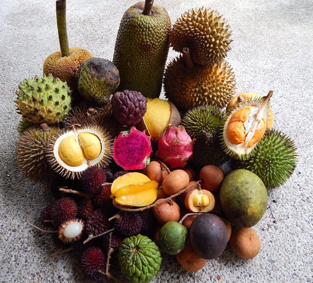 Fruits gathered by Petr Cech in Borneo