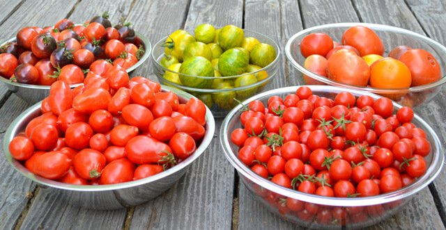 Rick and Karin Dina's garden tomatoes