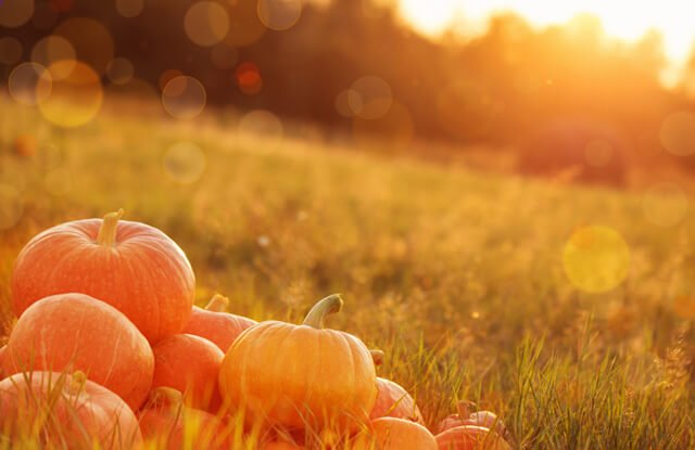 Pumpkins stacked atop one another in a sunny field