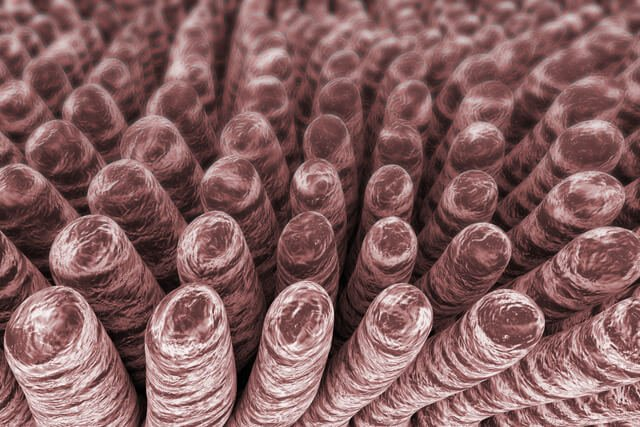 Villi are viewed from a microscope
