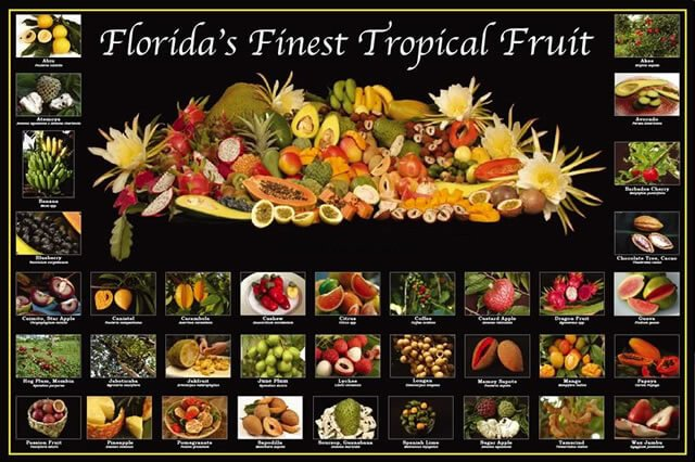Poster of Florida's finest tropical fruit