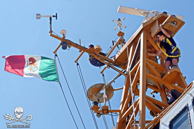 Tarah Millen works on top of a Sea Shepherd ship mast