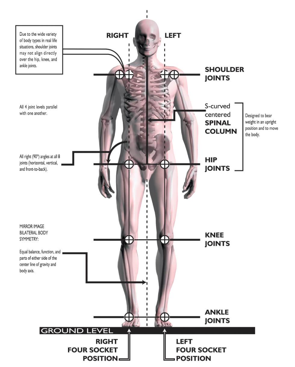 Roger Posture - front view - Posture Exercises Method - Fruit-Powered