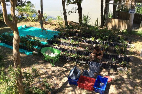 A planting session at Terra Frutis