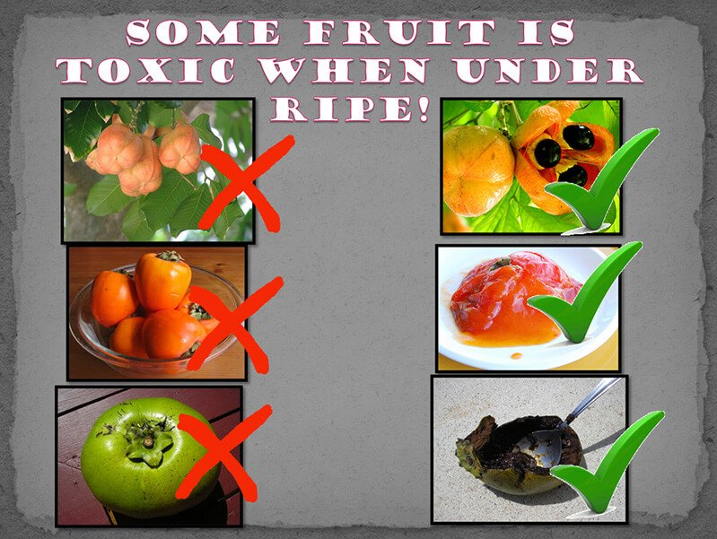 A chart featuring toxic unripe fruits