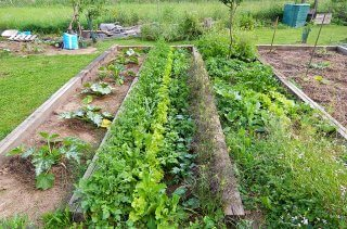 Garden space in the Cech garden