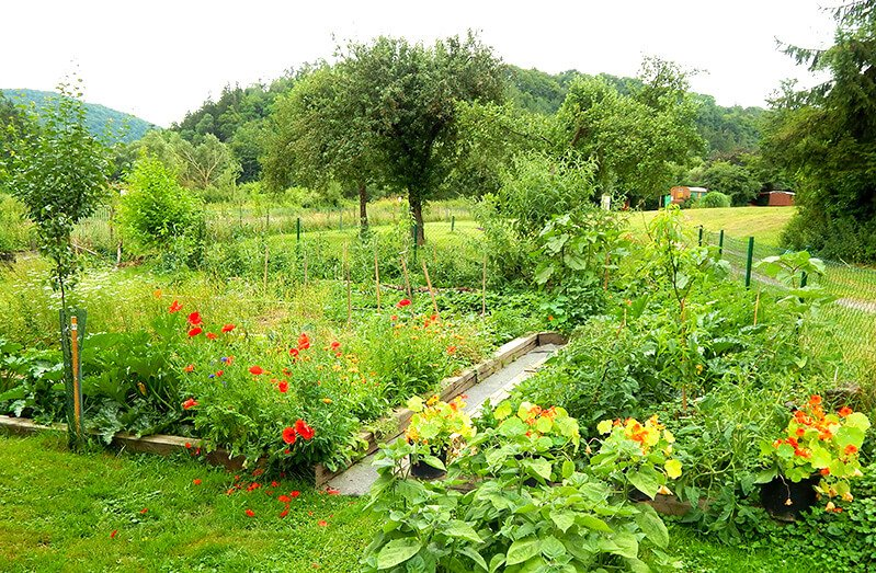 The garden of Petr and Alexandra Cech