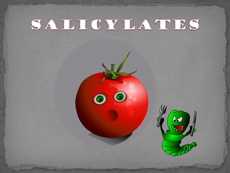 Illustration of salicylates