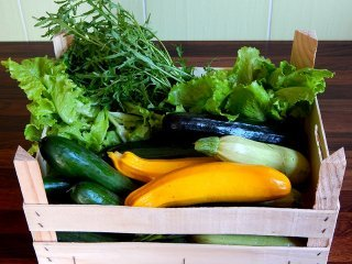 Zucchini, lettuce and dandelion in a wooden crate