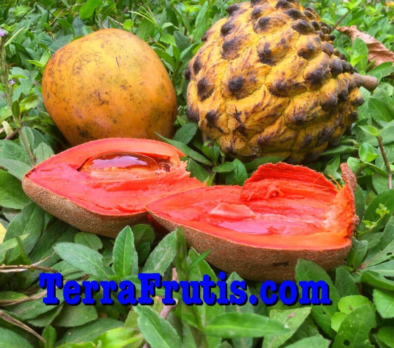 A selection of fruits grown at Terra Frutis