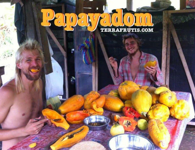 Jason Kvestad eats papaya with another fruit fanatic at Terra Frutis