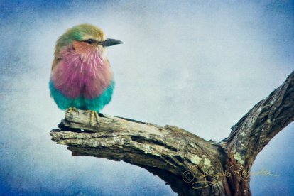 A multicolored bird photographed by Brooke Reynolds