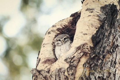An owl photographed by Brooke Reynolds
